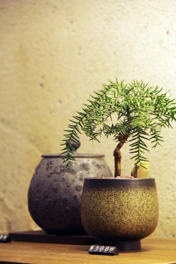 bonsai-616933_1920